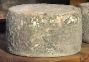 queso artesano con moho